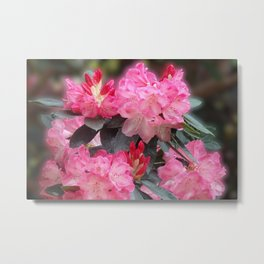Dreamy Pink Rhododendrons Metal Print