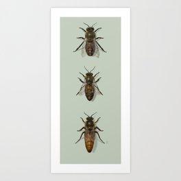 Honey Bee Family Art Print