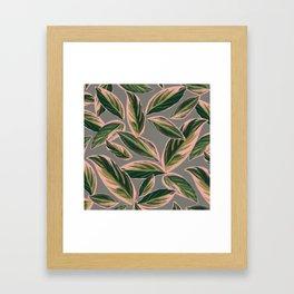 Calathea Leaves Pattern- Pink Green Gray Framed Art Print