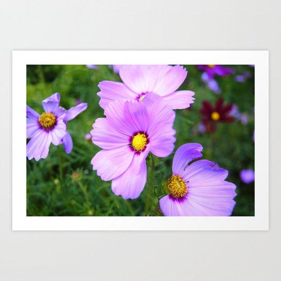 Purple Blaze Art Print