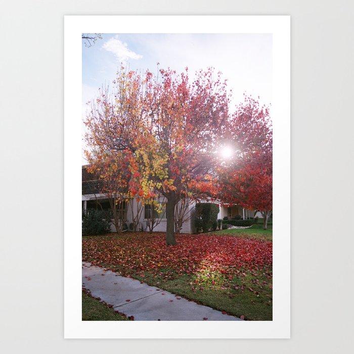 A Tree In Autumn Art Print