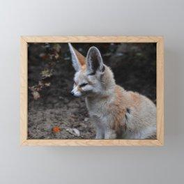 Fennec Framed Mini Art Print