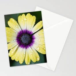 Afterthoughts Stationery Cards