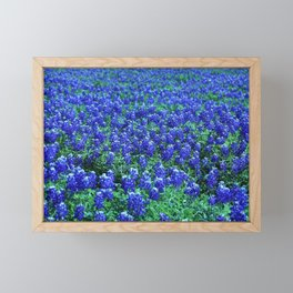 Field of Blue Framed Mini Art Print
