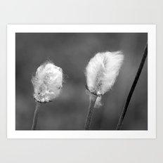 Cotton is High..... Art Print