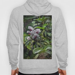 Tropical Orchids Hoody