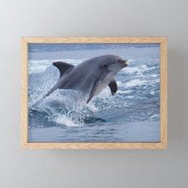 Bottenose dolphin Framed Mini Art Print