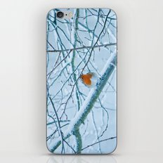 Robin in the cold iPhone & iPod Skin