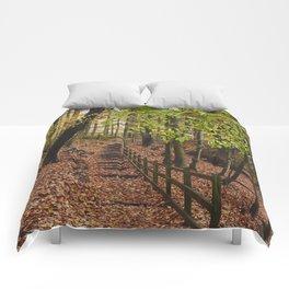 Steps through autumnal woodland. Derbyshire, UK. Comforters