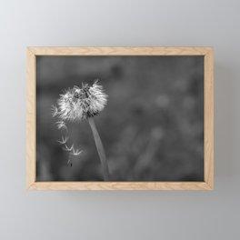 Black and white dandelion flying petals Framed Mini Art Print