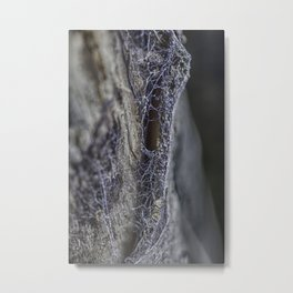 Surprise of nature- spider web Metal Print