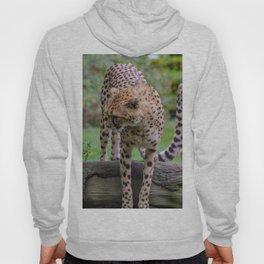 cheetah portrait fine art Hoody