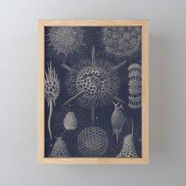 Vintage Radiolaria Diagram Framed Mini Art Print