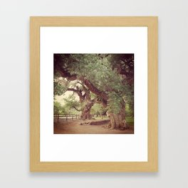 Mighty Cottonwood Trees Framed Art Print