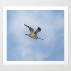 Curlew Art Print