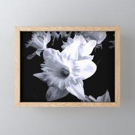 Daffodils In Black And White Framed Mini Art Print