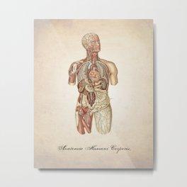 Human Anatomy Human Body Illustration Metal Print
