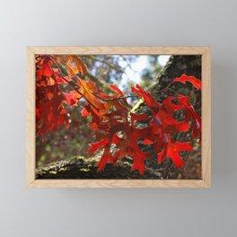 A Touch of Autumn Framed Mini Art Print
