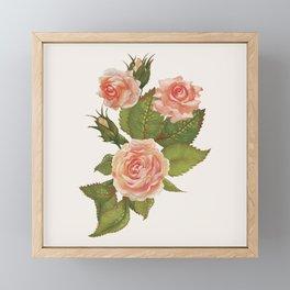 Rose Illustration Framed Mini Art Print