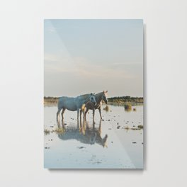 Camargue Horses #20 photograph Metal Print