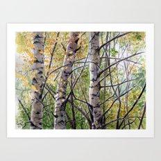 Birches A082 Art Print
