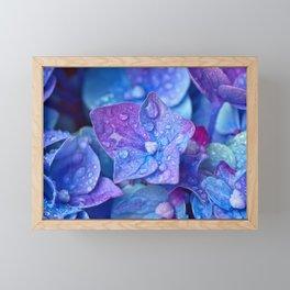 Hydrangea Flowers Close Up Framed Mini Art Print
