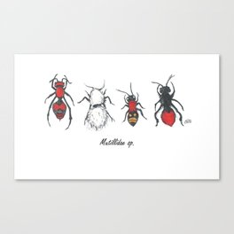 Velvet Ants; Mutillidae Canvas Print