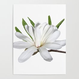 The Flower is the Star (Magnolia) Poster