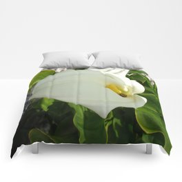 A Large Single White Calla Lily Flower Comforters