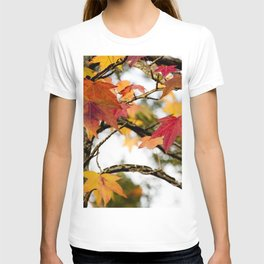 warmth of color in the cold T-shirt