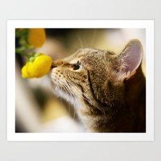 Tabby and the Flower Art Print