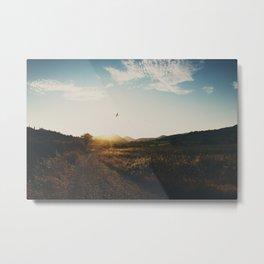 A bird in flight & a vineyard at sunset Metal Print
