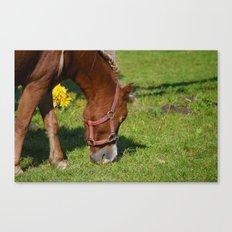 Renaissance Pony - Sorrel Red Canvas Print