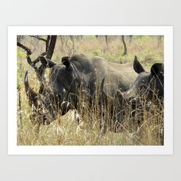 Black Rhino Pair Art Print