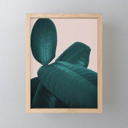 Ficus Elastica #4 #art #society6 Framed Mini Art Print