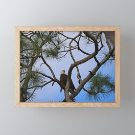 Harriet of Fort Myers Framed Mini Art Print