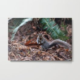 Squirrel in the Spotlight Metal Print