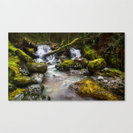 Enchaned forest Canvas Print