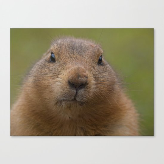 I'm cute Canvas Print