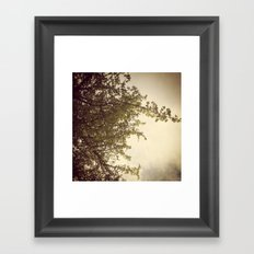 Sunlight & Branches Framed Art Print