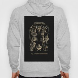 """""""Peridinea"""" from """"Art Forms of Nature"""" by Ernst Haeckel Hoody"""