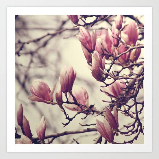 Magnolia II Art Print