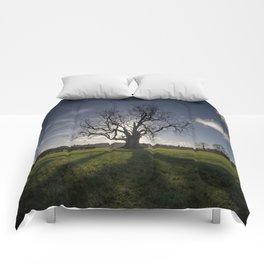 Holy Tree Comforters