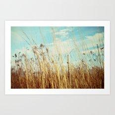 a winter field Art Print
