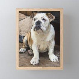 British bulldog puppy Framed Mini Art Print