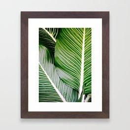 Big Leaves - Tropical Nature Photography Framed Art Print