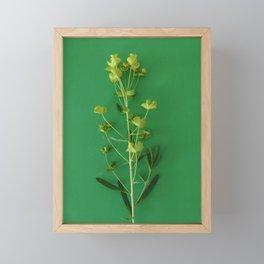 Green summer | Floral Photography Framed Mini Art Print