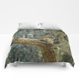 Brown Squirrel Comforters