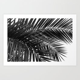 Tropical Palm Leaves - Black and White Nature Photography Art Print