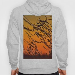 Sunset through the bushes Hoody